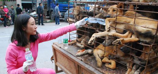 rescate de perros china