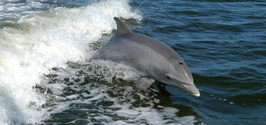 delfin libre