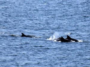 Delfines, en el lugar donde deben estar