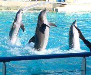 delfines-cautiverio
