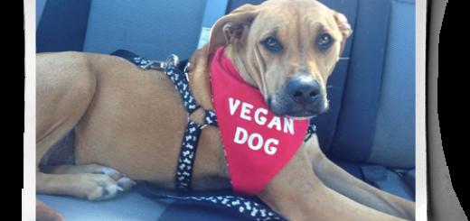 dieta vegana para perros